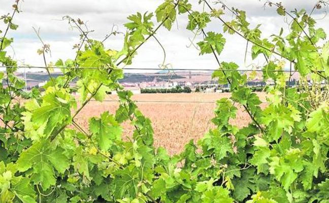 El Consejo Regulador rechaza incluir a Santo Domingo en la DOC Rioja