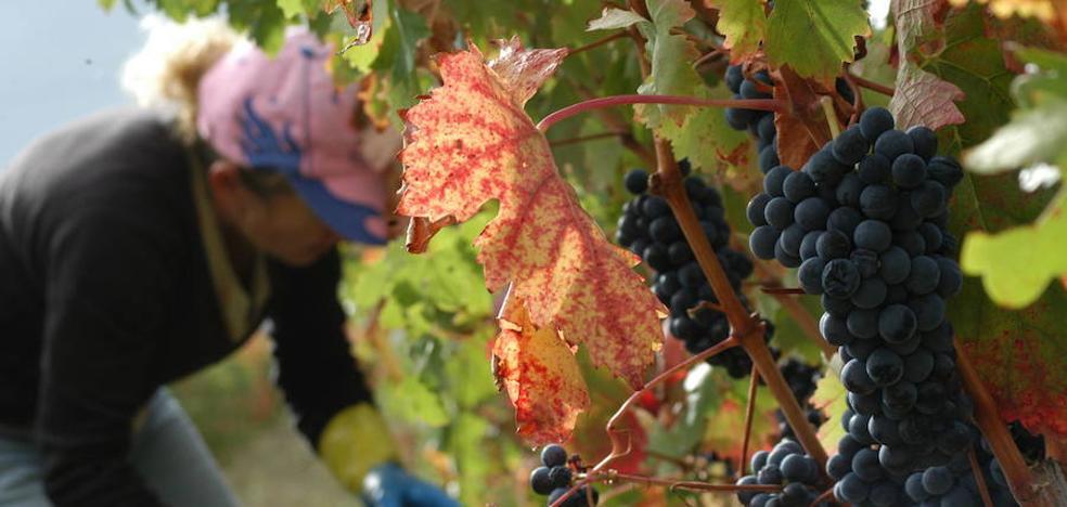 El cambio climático podría restar color y acidez al vino de Rioja