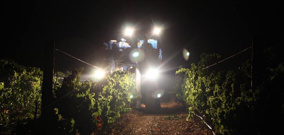 Arranca la vendimia nocturna en Finca Maetierra