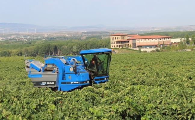 Comienza la vendimia de uva tinta