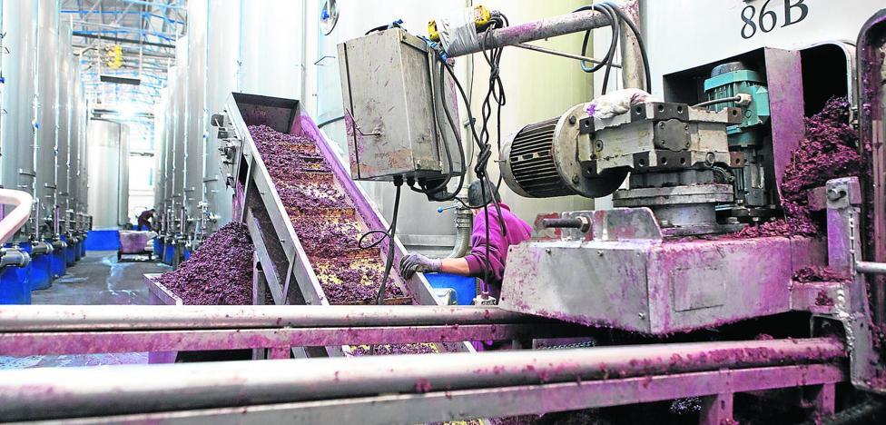 La cosecha roza ya los 350 millones de kilos y será, con la del 2012, la más corta del siglo