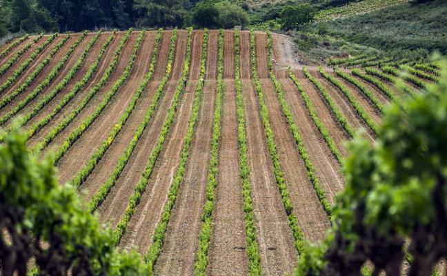 El estancamiento del mercado limita a 387 hectáreas el crecimiento de Rioja para 2018