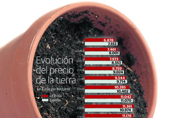El proceso de nuevas plantaciones de vid lleva a máximos el precio medio de la tierra