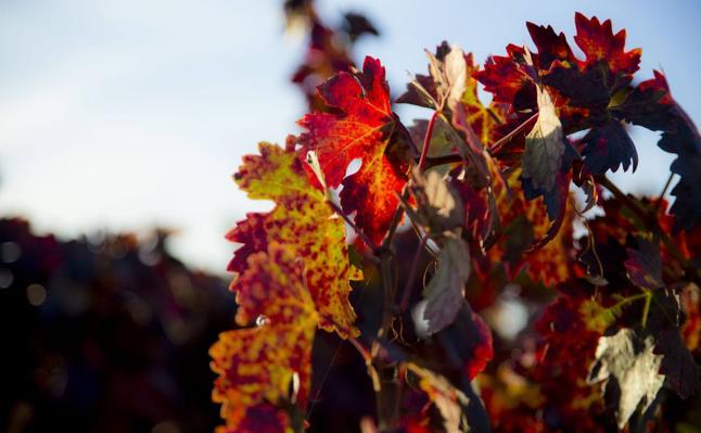 Otoño en las viñas riojanas