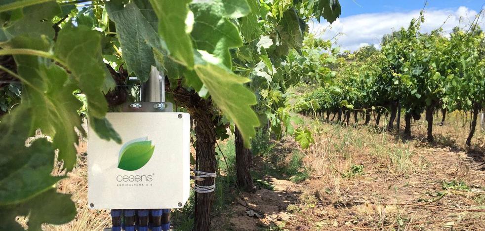 Tras La Rioja, Cesens pone su objetivo en Ribera del Duero