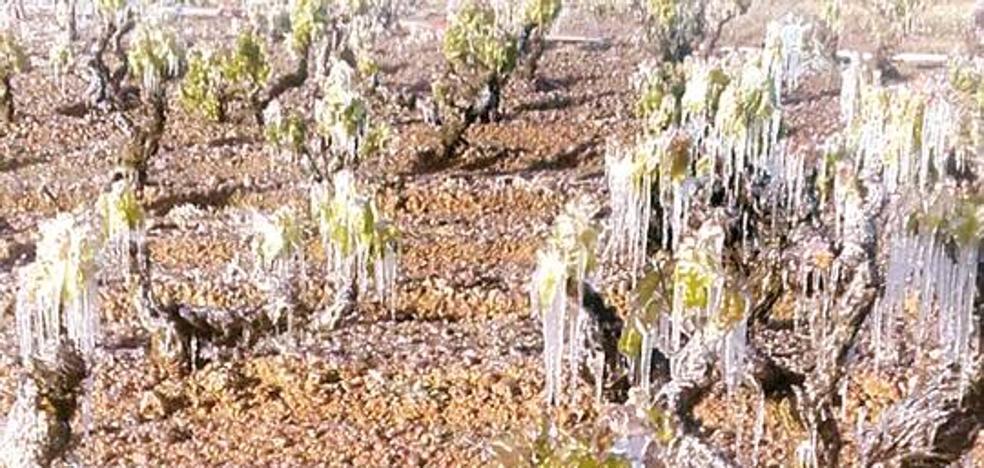 2.234 viticultores riojanos recibirán 18 millones en indemnizaciones por las heladas de abril