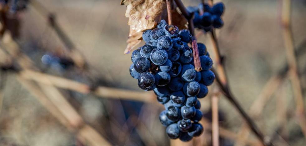 ¿Por qué la nieve es buena para la viña?