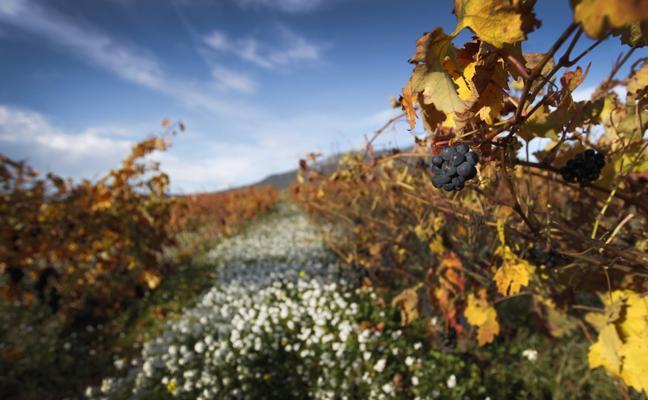Osés vería lógico que viñedos de Rioja, Álava y Navarra opten a Patrimonio universal