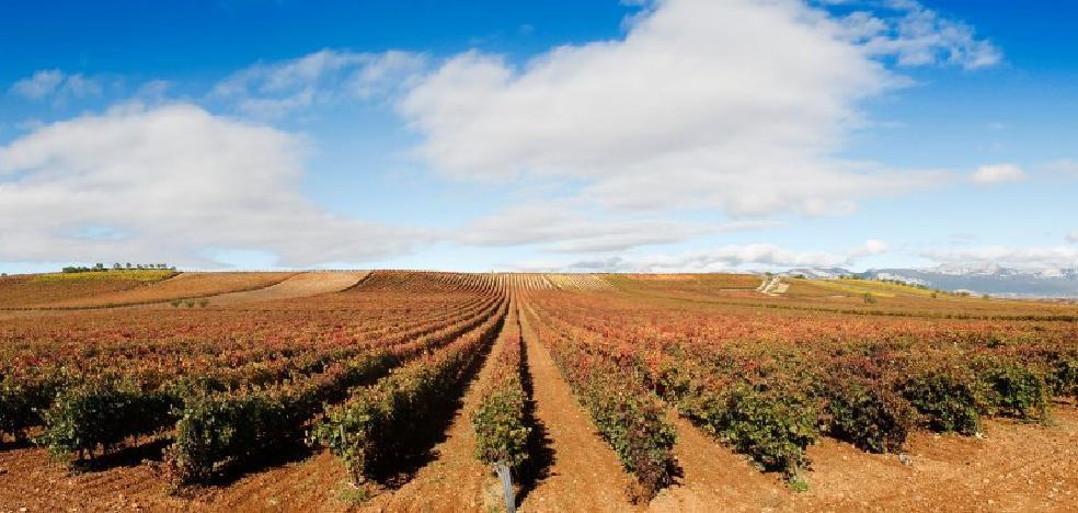 El BOE confirma la congelación de plantaciones en Rioja para el año 2018
