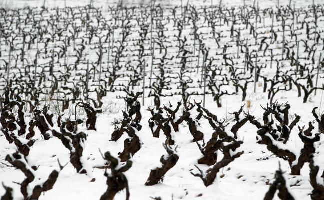 Europa publica el 'reglamento ómnibus' y permite por fin limitar por adjudicatario el reparto de viñedo