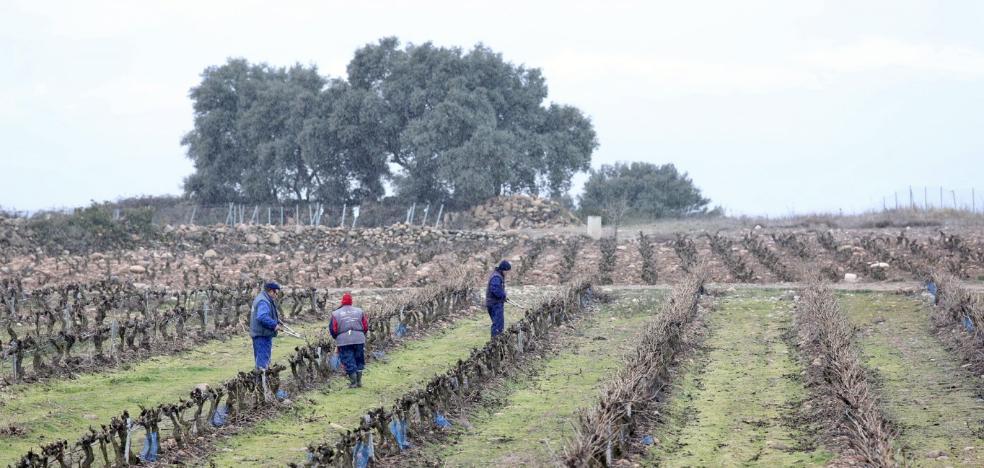 La escasez de vino dispara el precio de la cántara hasta el entorno de los 40 euros