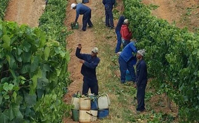 Sudáfrica también es tierra de vino
