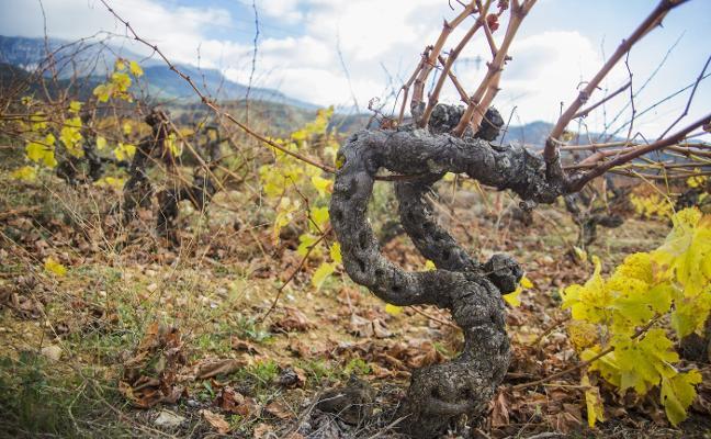 Los nuevos 'Riojas' y el cambio de ciclo