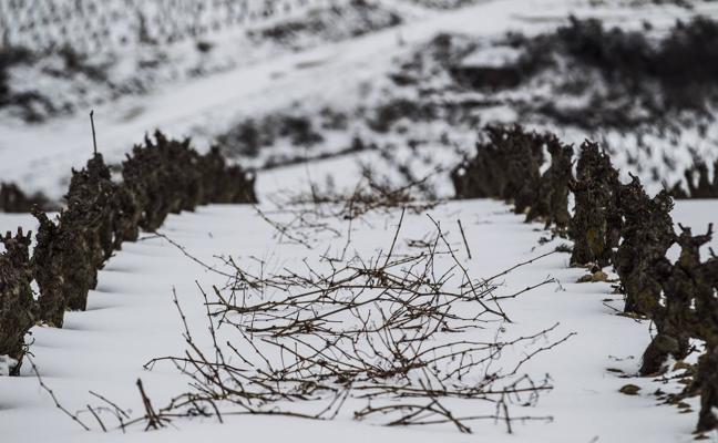 Los dueños de más de 21 hectáreas de tierra no tendrán prioridad para acceder a nuevo viñedo
