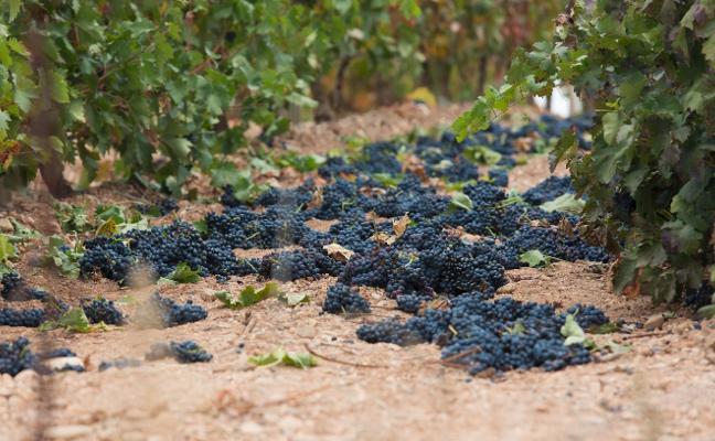 Rioja negocia un stock que permitiría al viticultor guardar vino para otras añadas
