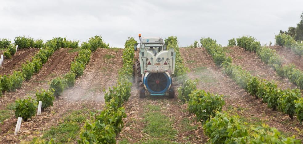 Las tormentas ponen en jaque a técnicos y viticultores ante el grave riesgo de mildiu