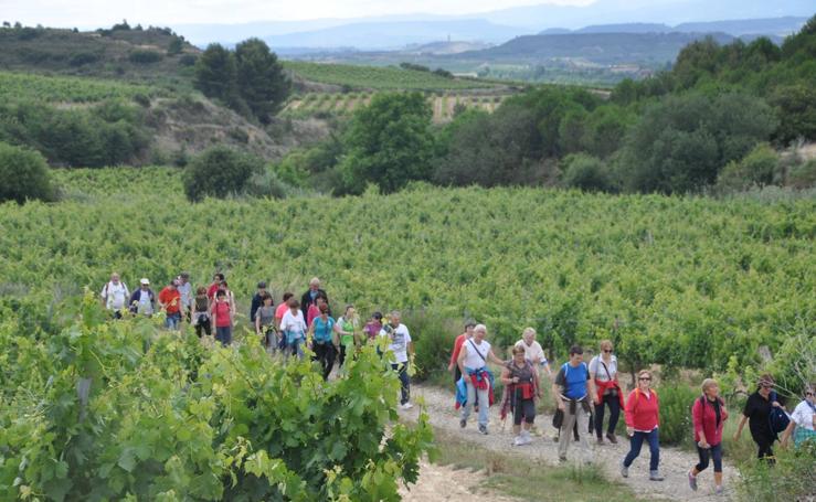 Paseo por los paisajes de viñedos
