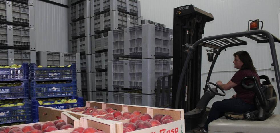 El exceso de producción de este año tira por los suelos los precios de la fruta riojana