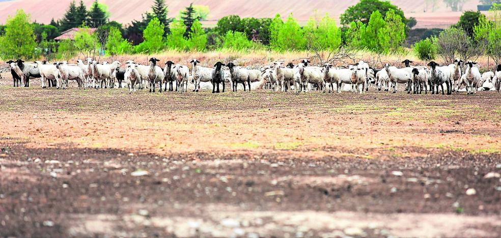 La persistencia de la sequía en agosto coloca al campo riojano en una situación crítica