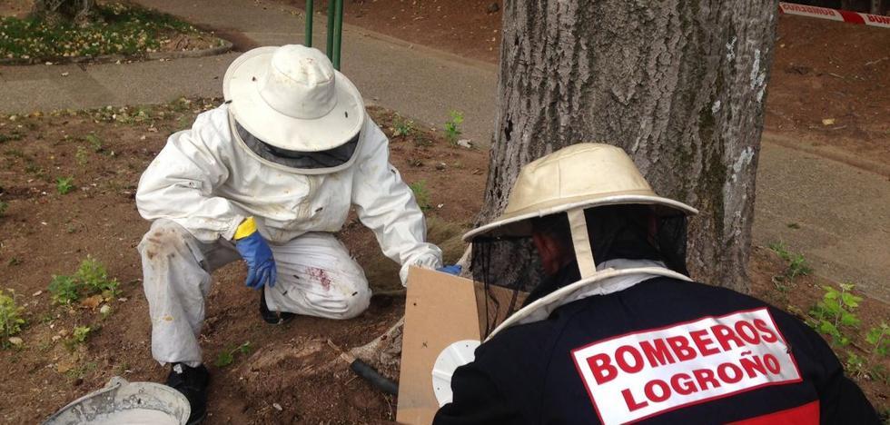 Los bomberos retiran unos enjambres de abejas en la Plaza de México