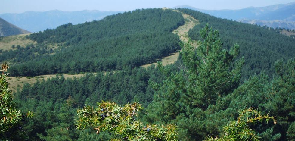 Medio Ambiente apoya con 177.421 euros actuaciones en bosques en zonas rurales