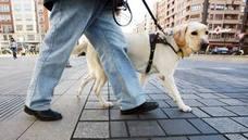 El Parlamento riojano amplía mediante ley los usos de perros de guía a asistencia