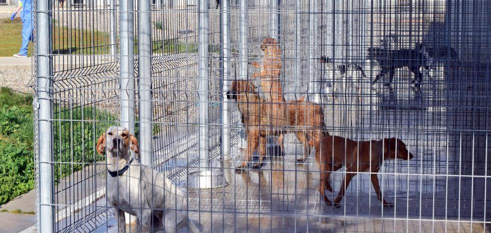 La marcha de sus dos veterinarias dejó varios días sin asistencia el Centro de Acogida de Animales