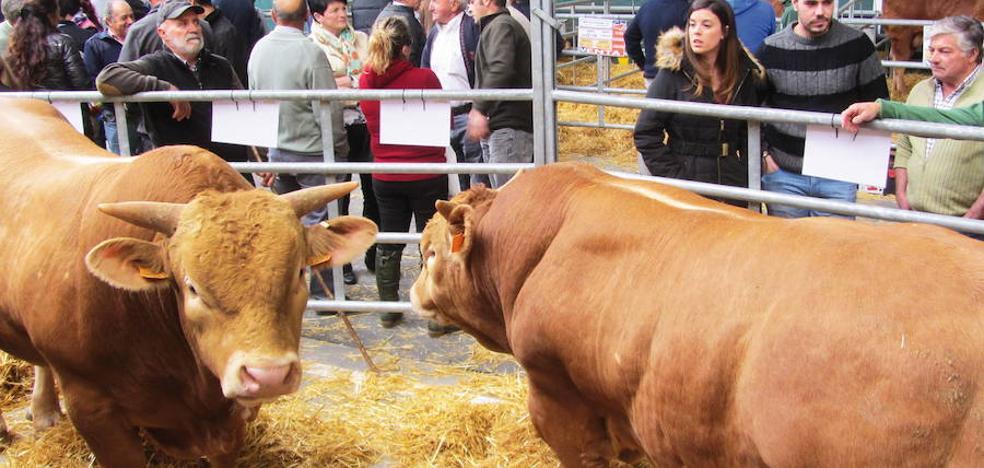 Subvenciones para la compra de animales dedicados a la mejora genética