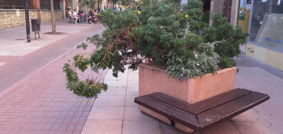 La Guindilla: una jardinera que está «muy descuidada»