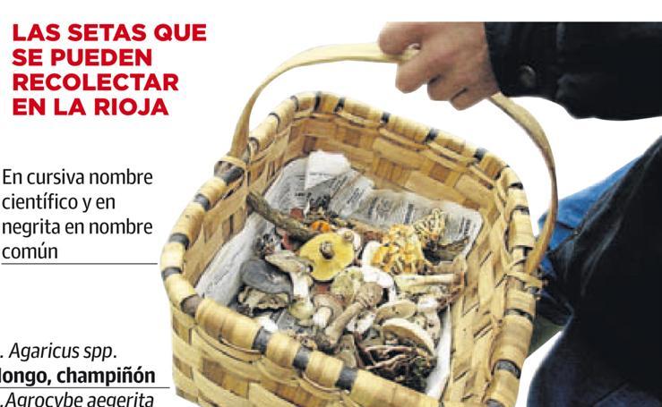 Las setas que se pueden recolectar en La Rioja