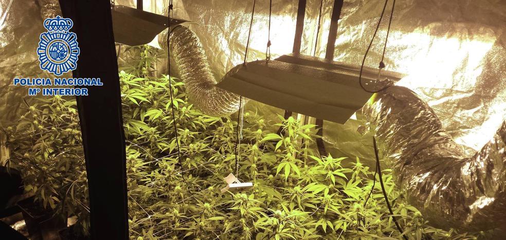 Un trimestre antidroga en Logroño: 10 detenidos, 12 kilos de marihuana
