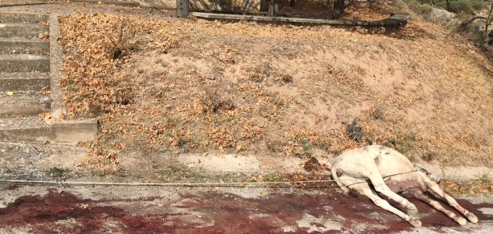 AnimaNaturalis denuncia la muerte por maltrato de un burro en Arnedillo