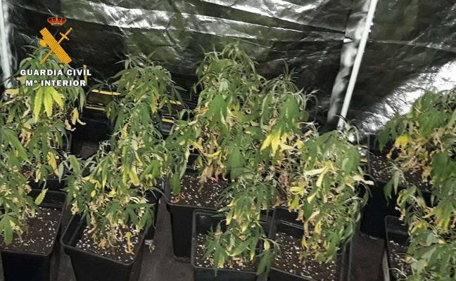 Un incendio en una cocina deja al descubierto una plantación de marihuana en Lardero