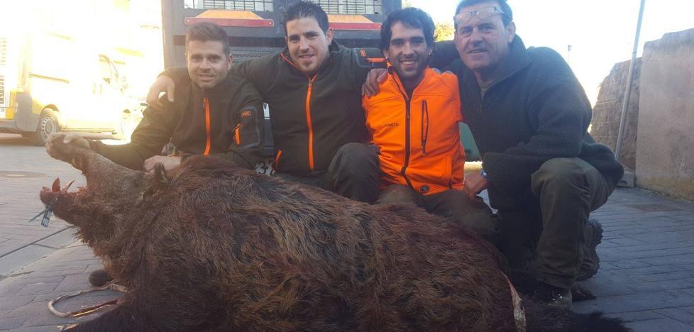 Cazado en Sojuela un jabalí de 165 kilos