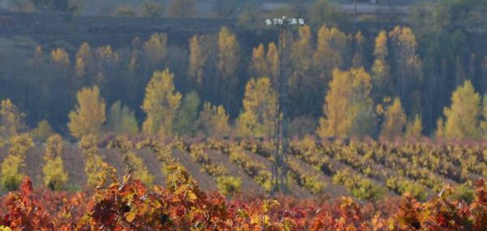 Unanimidad 'anticables' en el Parlamento: arrancan los trámites para proteger el viñedo