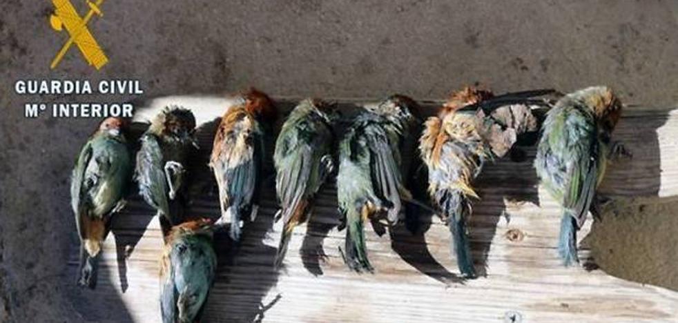 Una mujer domiciliada en Logroño, investigada por tráfico de aves exóticas