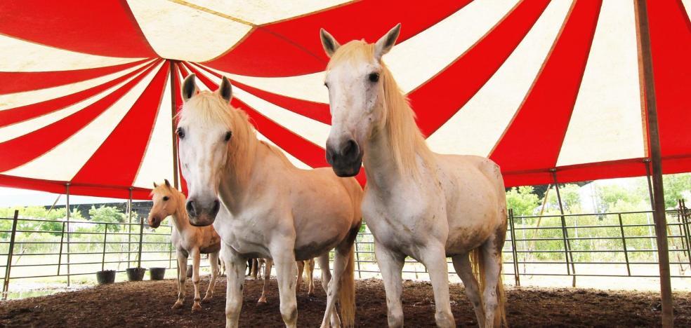 Cambia vuelve a llevar al pleno que Logroño no permita circos con animales