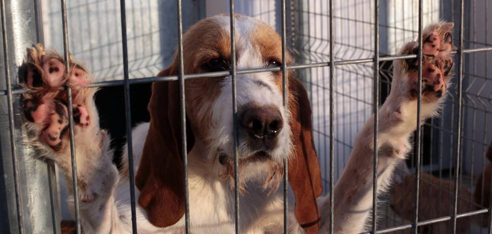 La Protectora de Animales de La Rioja denuncia que la perrera impide salvar animales de ser sacrificados