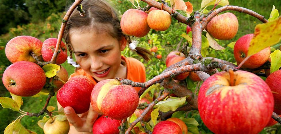 La fruta en el colegio entra