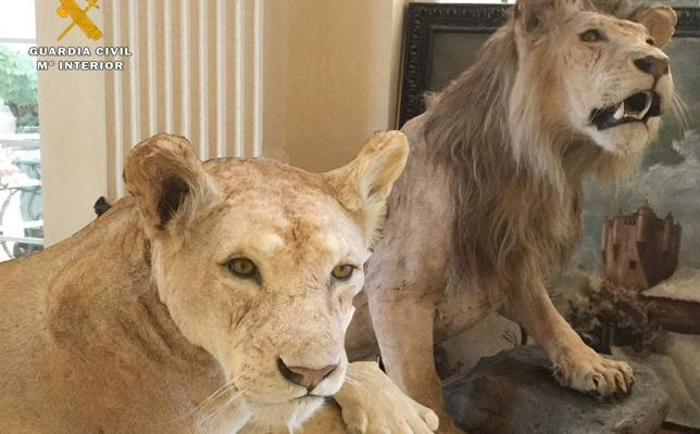 Una historia de leones en Alfaro