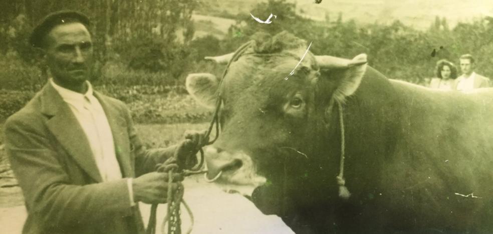 La Retina: el abuelo 'Fortuna' guía al toro de Sorzano