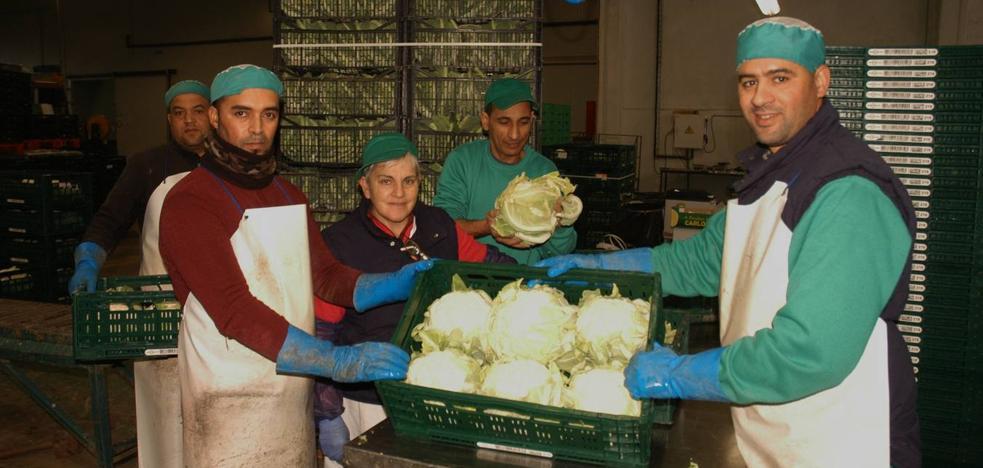 Los precios de las hortalizas se congelan