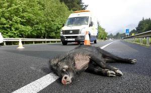 Ayudas para que los cotos contraten seguros contra accidentes de tráfico