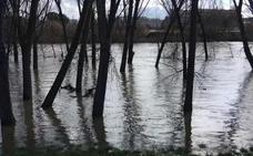 El caudal del Ebro empieza a descender en Logroño