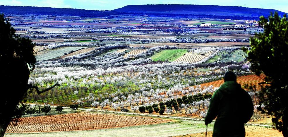 El valle del Ebro florece