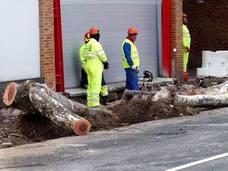 Cs pide la comparecencia de Ruiz Tutor para que explique la tala de árboles en Logroño