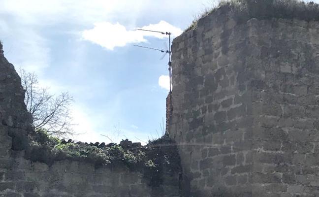 Cs aplaude la poda del árbol que afectaba a la muralla