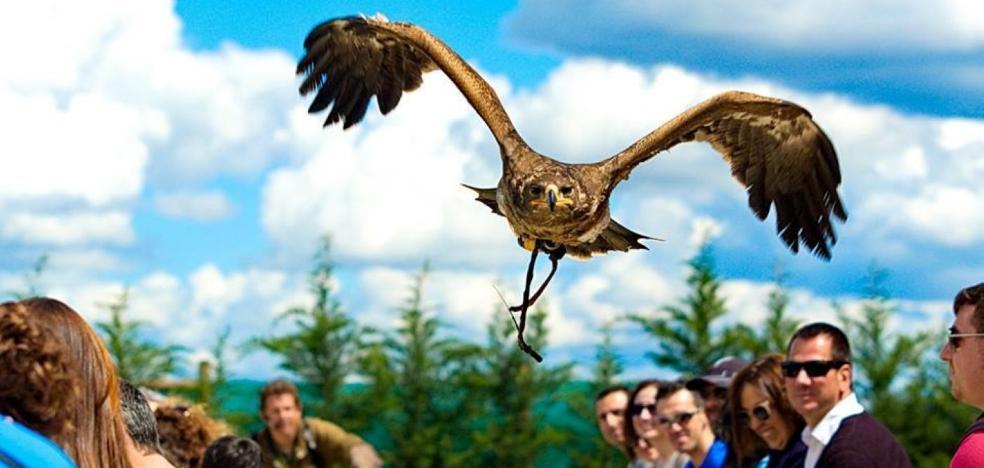 Tierra Rapaz inicia un nuevo vuelo
