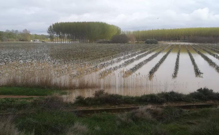 El Ebro inunda Alfaro