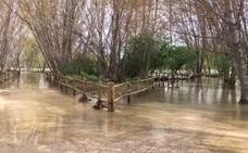 VIDEO: El Iregua se desborda en Logroño